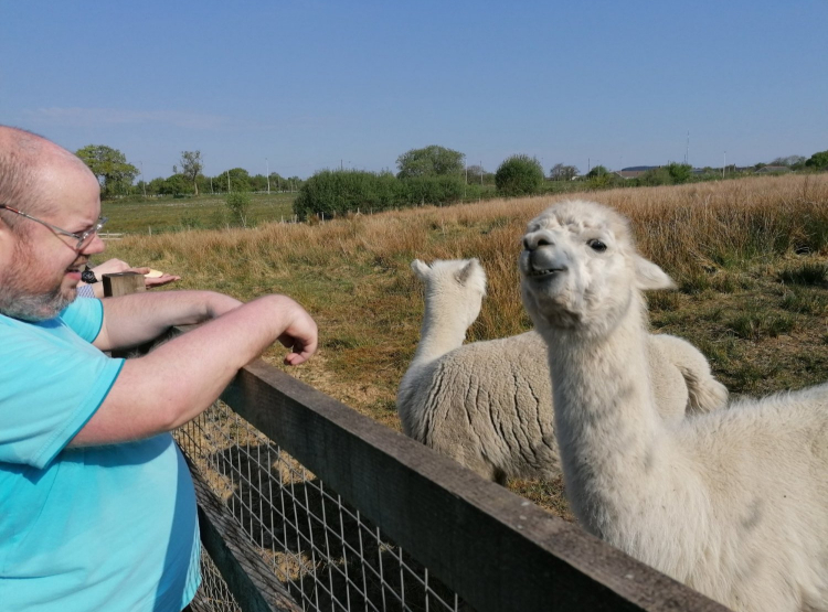 man with lamas